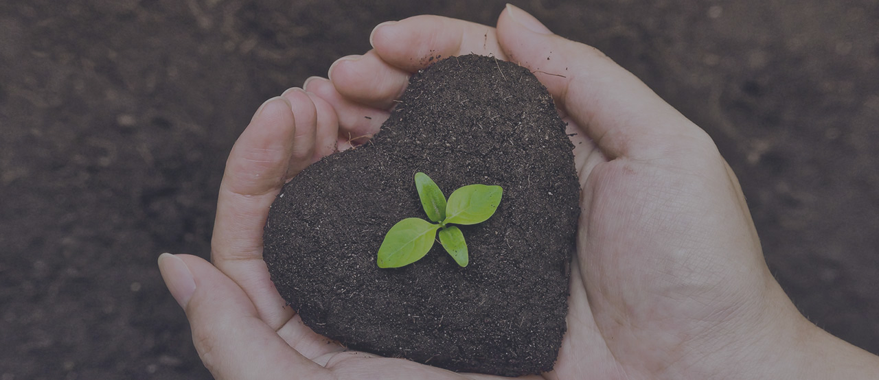 heart shape soil with a flower growing held by human hands