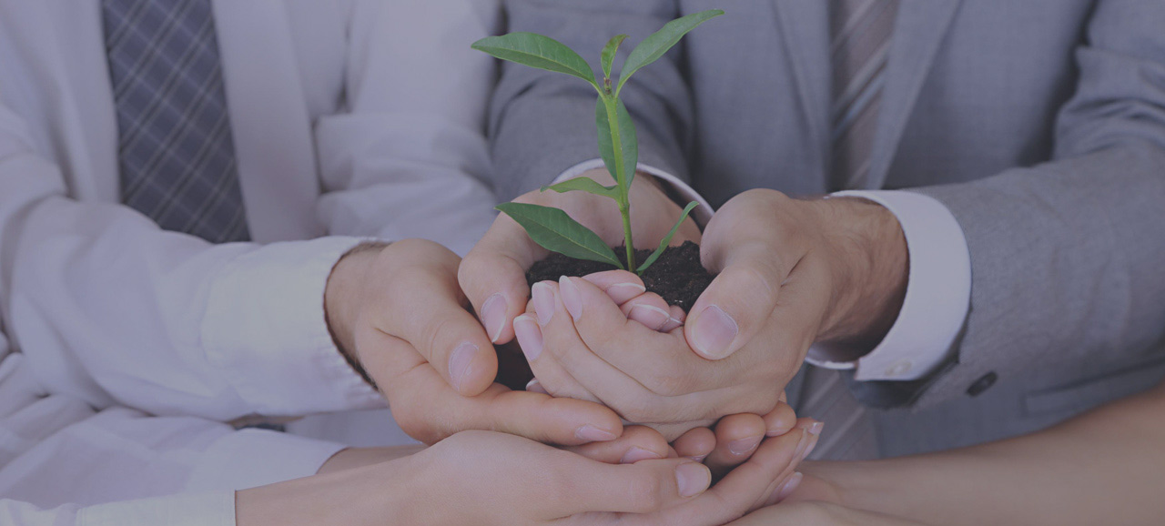 business people hands holding plant