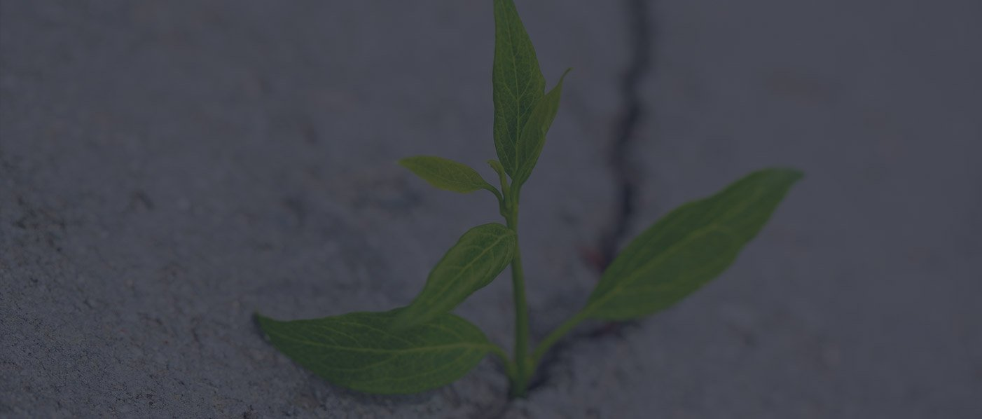 small sprouting flower in sand